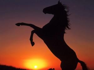 caballos-salvajes-atardecer